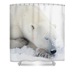 Polar Bear Ursus Maritimus Has His Eyes Shower Curtain by Richard Wear