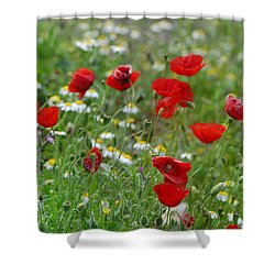 Poppies Shower Curtain by Guido Montanes Castillo