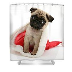Pug Puppy Shower Curtain by Jane Burton