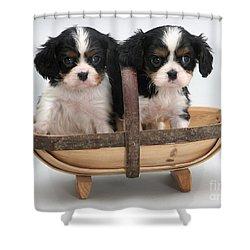 Puppies In A Trug Shower Curtain by Jane Burton