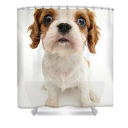 Puppy Shower Curtain by Jane Burton