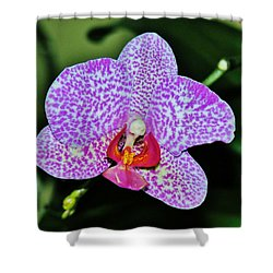Shower Curtain featuring the photograph Purple Orchid by Sherman Perry