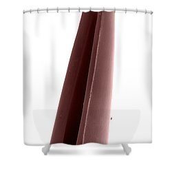 Rattlesnake Fang, Sem Shower Curtain by Ted Kinsman