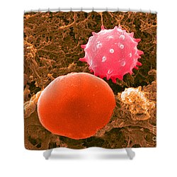 Red And White Blood Cells, Sem Shower Curtain by Science Source