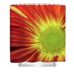 Red Daisy Shower Curtain by Sabrina L Ryan