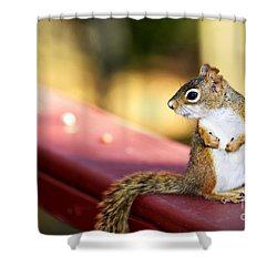 Red Squirrel On Railing Shower Curtain by Elena Elisseeva