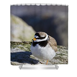 Ringed Plover Shower Curtain