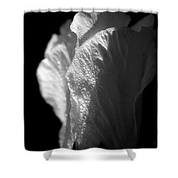 Shower Curtain featuring the photograph Rose Of Sharon by Jeannette Hunt