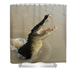 Salt Water Crocodile 2 Shower Curtain by Bob Christopher