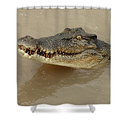 Salt Water Crocodile 3 Shower Curtain by Bob Christopher