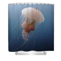 Sea Nettle Jellyfish In Atlantic Ocean Shower Curtain by Karen Doody