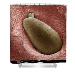 Sem Of A Strawberry Seed Shower Curtain by Ted Kinsman