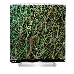 Sem Of Mycelium On Mushrooms Shower Curtain by Ted Kinsman