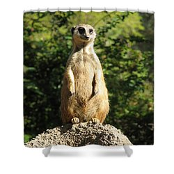 Shower Curtain featuring the photograph Sentinel Meerkat by Carla Parris