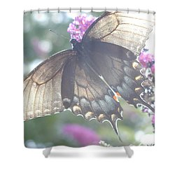 Sheer Butterfly Shower Curtain