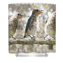 Sing Sing Sing Shower Curtain by Amy Tyler