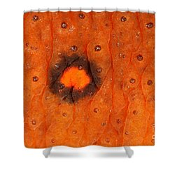 Skin Of Eastern Newt Shower Curtain