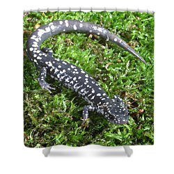 Slimy Salamander Shower Curtain by Ted Kinsman