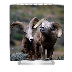 Shower Curtain featuring the photograph Smile by Steve McKinzie
