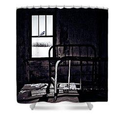 Song Bird Shower Curtain by Jerry Cordeiro