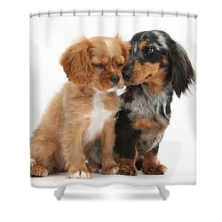 Spaniel & Dachshund Puppies Shower Curtain by Mark Taylor