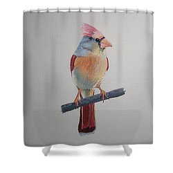 Spring Cardinal Shower Curtain by Norm Starks