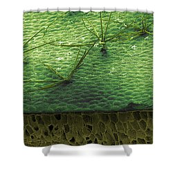 Staghorn Fern, Sem Shower Curtain by Ted Kinsman