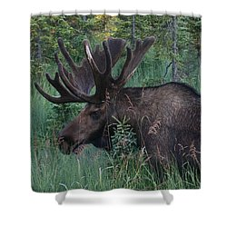 Shower Curtain featuring the photograph Standing Proud by Doug Lloyd