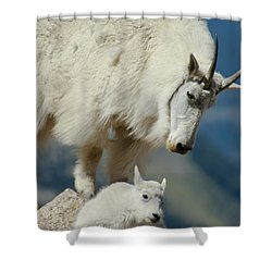 Standing Watch Shower Curtain by Colleen Coccia
