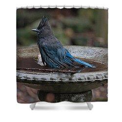Shower Curtain featuring the digital art Stellar Jay In The Birdbath by Carol Ailles