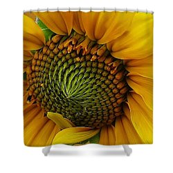 Sunflower Close Up Shower Curtain by Bruce Bley