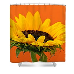 Sunflower Closeup Shower Curtain by Elena Elisseeva
