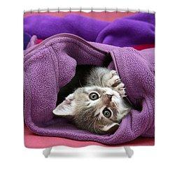 Tabby Kitten Shower Curtain by Jane Burton