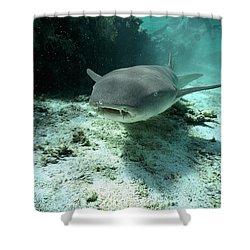 Tawny Nurse Shark Nebrius Ferrugineus Shower Curtain by Mike Parry