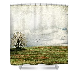 The Lone Tree Shower Curtain by Darren Fisher