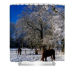 Thoroughbred Horses, Mares In Snow Shower Curtain by The Irish Image Collection