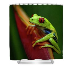 Tree Frog 19 Shower Curtain by Bob Christopher