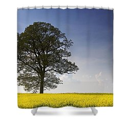 Tree In A Rapeseed Field, Yorkshire Shower Curtain by John Short
