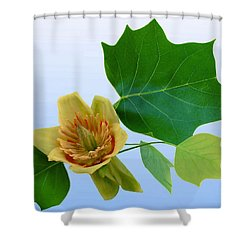 Tulip Poplar Tulip Shower Curtain by Kristin Elmquist