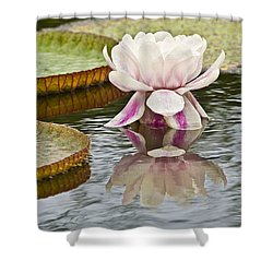 Victoria Amazonica Water Lily Flower Vertical Shower Curtain