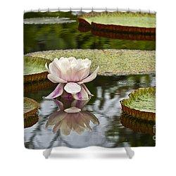 Victoria Amazonica Flowering Shower Curtain