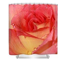 Wet Rose Shower Curtain by Sabrina L Ryan