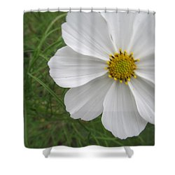 Shower Curtain featuring the photograph White Beauty by Tina M Wenger