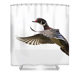 Wood Duck Shower Curtain by Mircea Costina Photography
