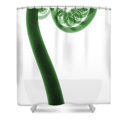 X-ray Of A Fern Shower Curtain by Ted Kinsman