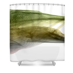 X-ray Of Muskie Shower Curtain by Ted Kinsman