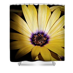 Yellow Daisy Shower Curtain by David Patterson