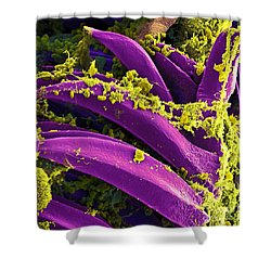 Yersinia Pestis Bacteria, Sem Shower Curtain by Science Source
