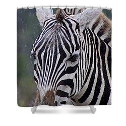 Zebra Shower Curtain by Thomas Marchessault