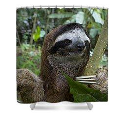 Brown-throated Three-toed Sloth Shower Curtain by Suzi Eszterhas